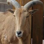 Animal farm in Long Island