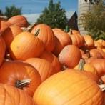 Long Island's Pumpkin Patch